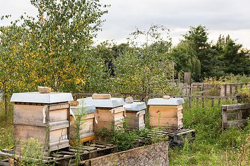 Bienenstöcke im Urban Garden