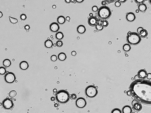Die Emulsion unter dem Mikroskop