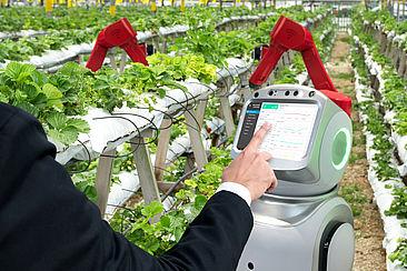 Eine Hand bedient einen Computer in einer Erdbeerplantage