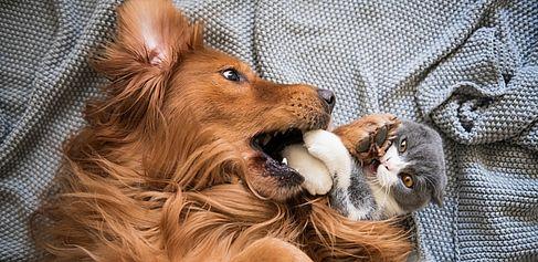 Hund und Katze kappeln sich