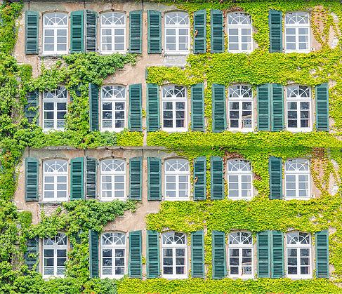 Von Efeu bedeckte Gebäudefassade